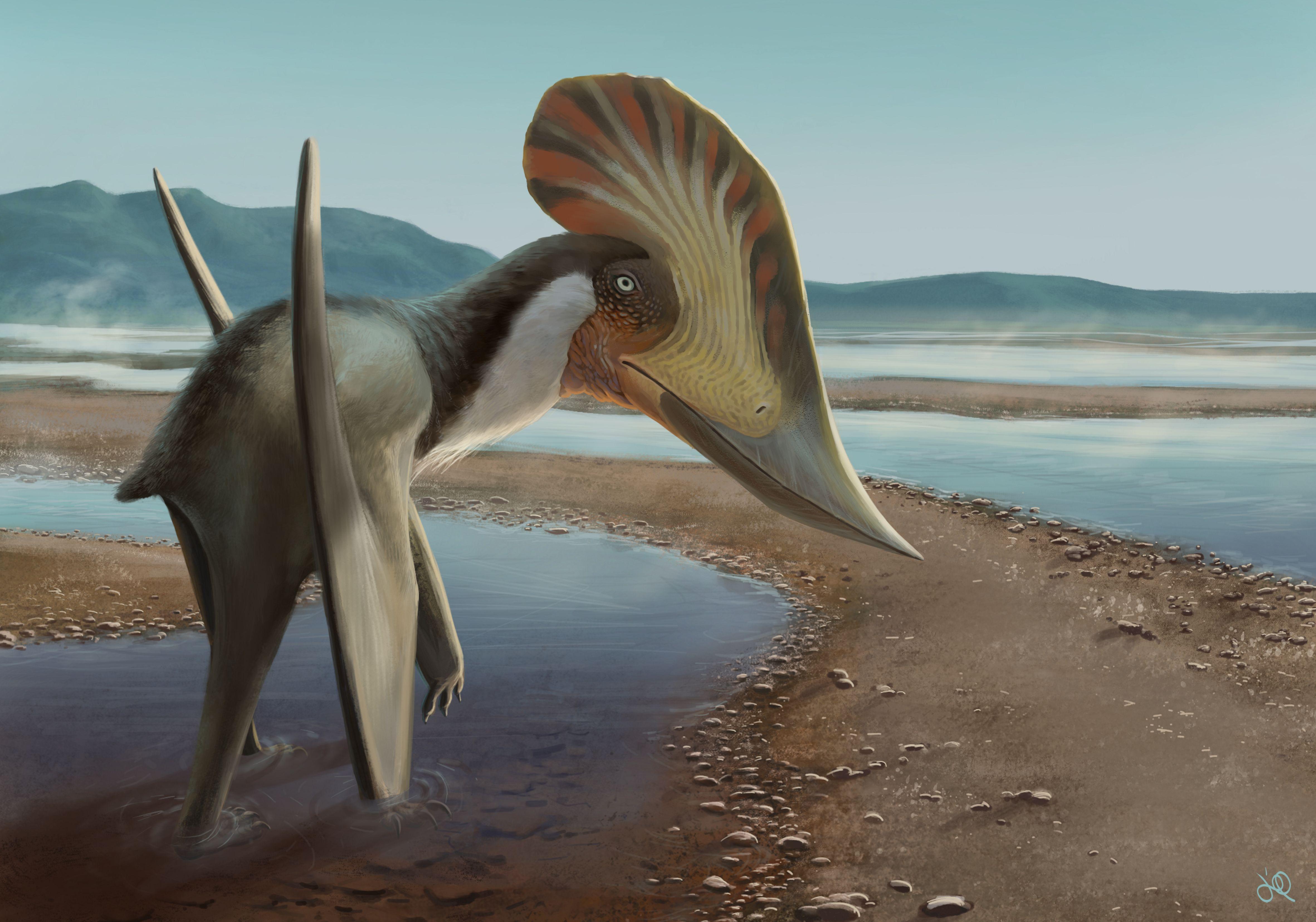 ilustração representa o kariridraco, animal alado pousado em uma praia