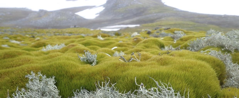 vegetação antártica